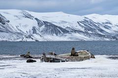 ANT180318-1900 (robertopastor) Tags: antarctica antarctique antarktika antartic antártida deceptionisland expedición fuji robertopastor southshetlandislands viaje xt2 xf1655mm aq