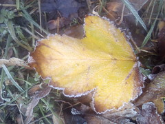Hand wrapped with frost. #autumn #fall #frosty #autumnleaves #mobilephotography #mobilephoto #nature (jaco.stardust1) Tags: fall mobilephotography nature autumnleaves frosty autumn mobilephoto