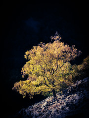 Golden Dawn (philippe baumgart) Tags: alsace elsass valléedemunster wormsa autumn automne tree light