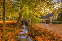 Autumn Mood in Staverden (Rob Kints (Robk1964)) Tags: 2017 deposbank arnhem autumn beekbergenhoenderlo dieren foliage heath heather heide nederland netherlands rheden
