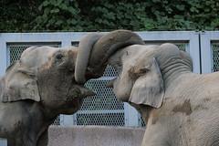 DSCF2667 (jojotaikoyaro) Tags: zoo tama tokyo animal fujifilm xh1 xf100400mm
