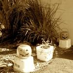 Pumpkin Lane thumbnail