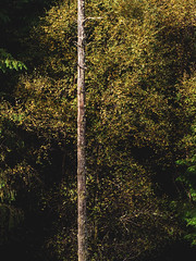 Changing Colours - Loch Eck Sept 2018 (GOR44Photographic@Gmail.com) Tags: trees loch eck autumn gor44 scotland argyll cowal leaves bark panasonic g9 olympus 1240mmf28 loop