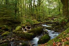Cheesy slow exposure river shot (Apionid) Tags: skull river dartmoor burrator woodland stream green werehere hereios nikond7000 devon