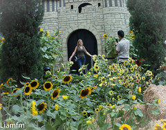 from cloud forest to Flower Dome 2 (Liamfm .) Tags: singapore flowerdome flowerdomeandcloudforestdome sunflowers flowers