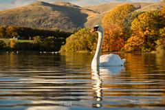 Gartmorn - 14 Oct 2018 - 19.jpg (ibriphotos) Tags: woodland alloaharbour blue sunset river alloa clackmannanshire riverforth trees gartmorndam leaves orange autumn evening goldenhour sky sunsets