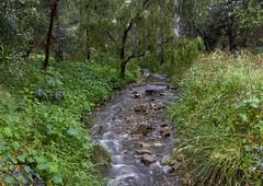 Spring Rain makes the Creek flow (|Sarah|) Tags: australia campus canon1200d colourful creek flowing magill nature photography rain southaustralia spring university universityofsouthaustralia vibrancy vibrant