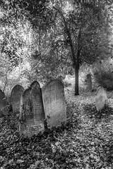 Old Cemetery 19 (steveholding8) Tags: autumn southamptonoldcemetery cemetery graves graveyard gravestones tombs tombstones blackandwhite mono