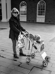 walking the dog  #011 (lynnb's snaps) Tags: ilfordfp4 leicaiiif xtol bw film rangefinder 2018 dogs manly leicafilmphotography cv35mmf25colorskoparltm street sydney australia bianconegro blackwhite bianconero biancoenero blancoynegro noiretblanc schwarzweis monochrome ishootfilm
