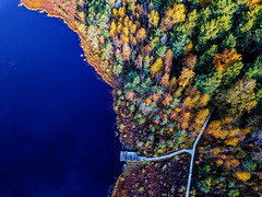 Autumn colors (Zygios) Tags: autumn colors drone dronefly dronephotography dji mavicpro lithuania lietuva baltics lake swamp trees colorfull path aerial nature exploring
