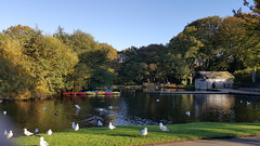 A day out at Shibden Park Lake. (Richard Abson) Tags: halifax calderdale shibden park boats boathouse autumn samsung galaxys6 sunset trees water reflection sky birds