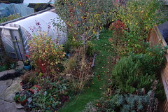Looking Down on the Back Garden - October 2018 (basswulf) Tags: polytunnel d40 1855mmf3556g lenstagged unmodified 32 image:ratio=32 permissions:licence=c 20181018 201810 3008x2000 lookingdownonthegarden garden normcres oxford england uk