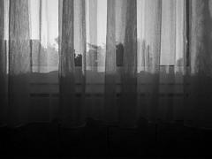 Nachmittagssonne (onnola) Tags: deutschland germany interior wohnung flat bad badezimmer bathroom schwarzweis monochrom blackwhite monochrome fenster gardine window vorhang store curtain sonne schatten sun shadow licht light grenze