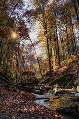 A place to rest (Parchman Kid (Jerry)) Tags: karlstalschlucht wanderziele im pfälzerwald trippstadt germany woods forest stream falls creek autumn leaves trees tree color colors parchmankid sony a6500 fall