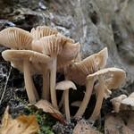 crop of fungi