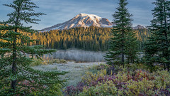Morning Goodness (writing with light 2422 (Not Pro)) Tags: reflectionlake fog forest fallcolors firtrees washingtonstate mountrainiernationalpark mrnp mountrainier volcano stratovolcano richborder landscape morninggoodness dawn sunrise variotessartfe42470 emount