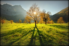 Standing on my 2 shadows (Eng, Austria) (armxesde) Tags: pentax ricoh k3 austria österreich tirol karwendel alpen alps mountain berg tree baum maple ahorn groserahornboden schatten shadow autumn fall herbst