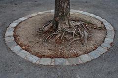 Framed Roots (Johannes Ortner) Tags: baum countrycodeat metapher rahmen schönbrunn tierpark wien wurzel österreich at