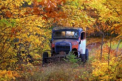 dodge power wagon (twurdemann) Tags: abandoned autumn canada canopy decay dodge fall2018 fallcolor fallcolour forest fujixt1 hiltonbeach junk landscape leaves northernontario ontario powerwagon rural stjosephisland toad trail trees truck xf55200mm