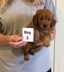 Darby Boy 3 12-9