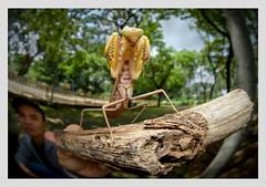 bạn tôi và bọ ngựa (bambi1404) Tags: wideangelwildlife widemacro ultrawide