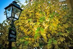Couleurs d'automne (Jack_from_Paris) Tags: r0003317 ricoh gr 28mm apsc capture nx2 lr couleurs colors street wide angle paris place area piazza feuilles leaves automne autumn 75013