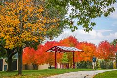 Green Bay Fall Colors-11