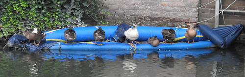 Rubber Ducky Ducky Ducky (3)