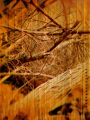 Between branches and wood (aRtphotojart) Tags: wood branches ramas madera autumn creative vintage brown selective