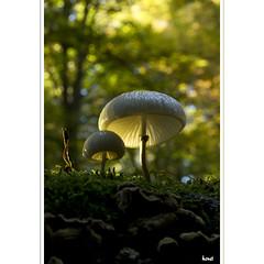 Licht und Schatten (horstmall) Tags: lumièreetombre lightandshadow mushroom champignon toadstool pilz grabenstetten erkenbrechtsweiler hochwang nature natur wald forest forèt macro makro schwäbischealb jurasouabe swabianalps horstmall