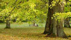 Autumn in Drottningholm (tonyguest) Tags: drottningholm autumn höst fall trees leaves green stockholm sverige sweden tonyguest royal pet cemetery