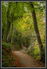 "SJ1_2556 - ""Lean on me..."" (SWJuk) Tags: skipton england unitedkingdom swjuk uk gb britain yorkshire northyorkshire wharfedale boltonabbey boltonabbeyestate woods trees path footpath trail track woodland woodlandtrail foliage leaves 2018 oct2018 autumn autumnal autumncolours nikon d7200 nikond7200 nikkor1755mmf28 rawnef lightroom landscape countryside"