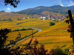 Niedermorschwihr (Haut-Rhin, F) (pietro68bleu) Tags: alsace vignoble automne couleursbeiges village clochertors pieddevigne elsass église collines