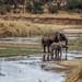 Safari Flickr (27 of 266)