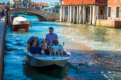 This dog was not afraid of the waters at all and was walking along the bow of the boat with no fear.