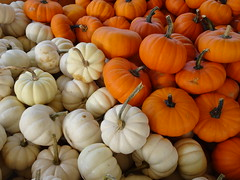 DSC07707 (kurmanstaff) Tags: kurmanphotography halloween dusselfarm kentohhalloween halloween2018 pumpkinsandsquash outdoorfestival