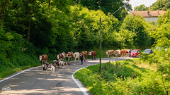 20180616-lago-maggiore-01824_web (derFrankie) Tags: 2018 anyvision bestofbest g italien l labels m p r t exported grass landscape lane leaf meadow pasture path plant recreation road ruralarea trail tree ultraselect