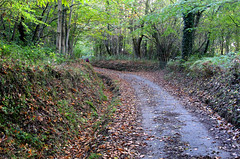 Autumn Path (iwys) Tags: path footpath fallen leaves autumn fall sussex england treees green walking countryside english
