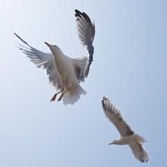 Seagulls 08 (pan_orama) Tags: marokko maroc morocco essaouira beach harbour seagulls fish sun color travel