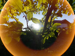 Eye of the flare! (elkarrde) Tags: nature experiment wideangle ultrawideangle 7mm autumn colours colors autumncolors september 2018 september2018 autumn2018 flare closefocus spectacularflare panasonic lumix panasoniclumixdmcgx7 panasoniclumix dmcgx7 gx7 panasonicgx7 camera:brand=panasonic camera:model=dmcgx7 microfourthirds mirrorless camera:mount=microfourthirds camera:format=microfourthirds camera:brand=lumix 43 olympus olympuszuikodigital olympuszuikodigital714mm14ed olympuszuikodigitalshg shg superhighgrade olympuszuikodigitalsuperhighgrade714mm14ed zuikodigital 714mm 714 7144 lens:brand=olympus lens:model=zuikodigital714mm14ed lens:format=fourthirds lens:mount=fourthirds lens:focallength=714mm lens:maxaperture=4 croatia location:country=croatia jastrebarsko jaska location:city=jastrebarsko twop incredibledonut