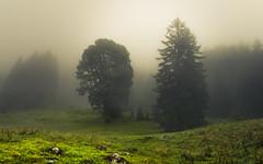 Foggy Alps (Netsrak) Tags: at alpen alps baum berg bã¤ume eu europa europe landschaft natur nebel wald fog landscape mist mountain nature woods