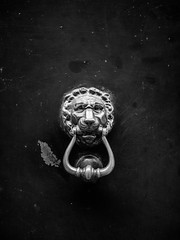 """""""Knock, knock. Does this door open?"""" (Nance Fleming) Tags: italy knockknock lion door rap entry guard"""
