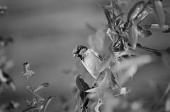 36460012 (johny_er) Tags: black white bird outdoor dynax 700si ilford classic analog summer wood fuji beercan 702104 minolta