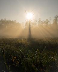 Bosch (20 of 32) (VarsAbove) Tags: kampinos kpn kampinoski park narodowy fog mist mgła morning sunrise dawn wschód polska poland łoś moose sony sonya7 a7ii coffe milkyway
