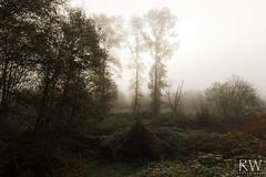 Consumed (sleepnever) Tags: fall cold morning fog trees sunlight ivy robertwatts