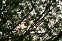 000058900012 (MaxMaxheee) Tags: minolta α8700i agfa200 agfa film streetshot 35105mm 135mm taiwan