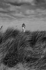 Sand Dunes (Tony Shertila) Tags: gbr geo:lat=5335641719 geo:lon=332194805 geotagged llanasacommunity talacre unitedkingdom wales 20160405105022walestalacrebeachpm1bw grass sanddunes europe
