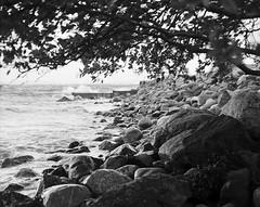 Knud the storm (Geir Bakken) Tags: mamiya mamiyarb67 analog filmisnotdead film ilford ilfordfp4 norway hort horten landscape tree storm weather blackandwhite bw