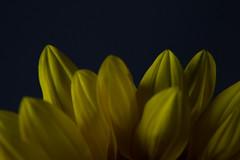 IMG_2678.jpg (KanayaS) Tags: lighting