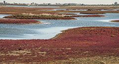 Essex RSPB Wallersea Island (daveknight1946) Tags: essex rspb wallerseaisland glasswort darkred pools islands yacht foulness